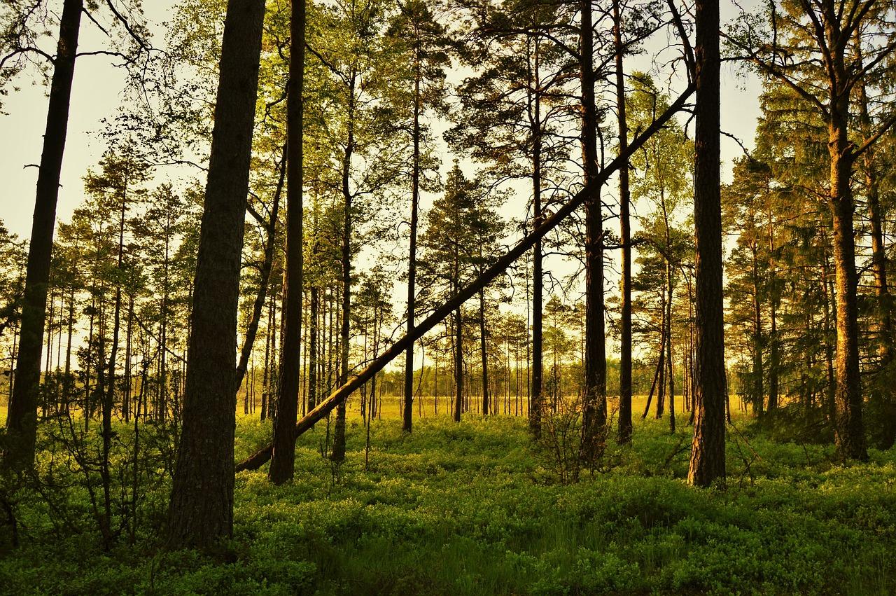 Природные ресурсы Швеции леса